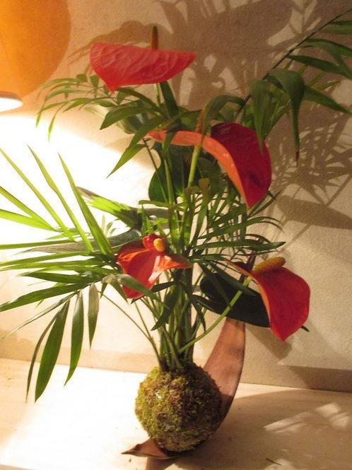 KOKEDAMA 85 Duo Anthurium rouge et chamaedorea