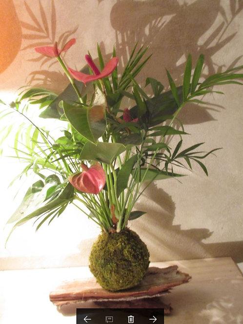 KOKEDAMA 85 Duo Anthurium rose et chamaedorea
