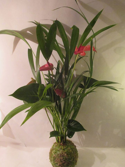 KOKEDAMA 101 Duo Anthurium rose/Areca