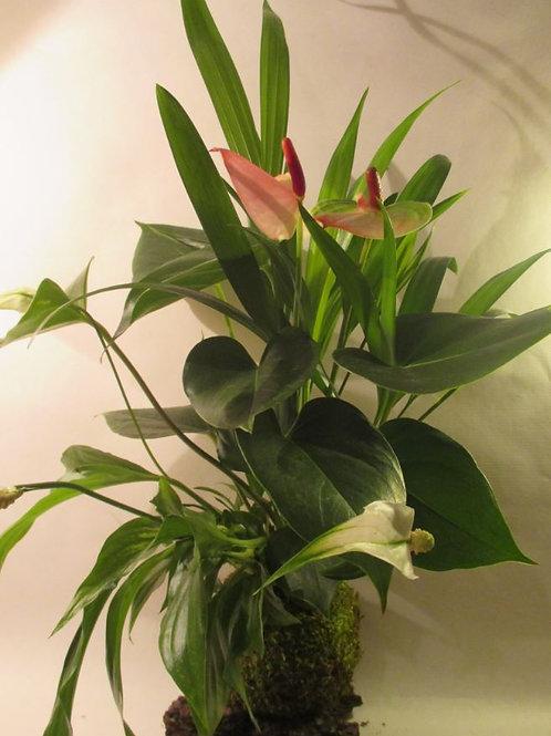 KOKEDAMA 89 Trio Anthurium rose/Areca/spathiphyllum