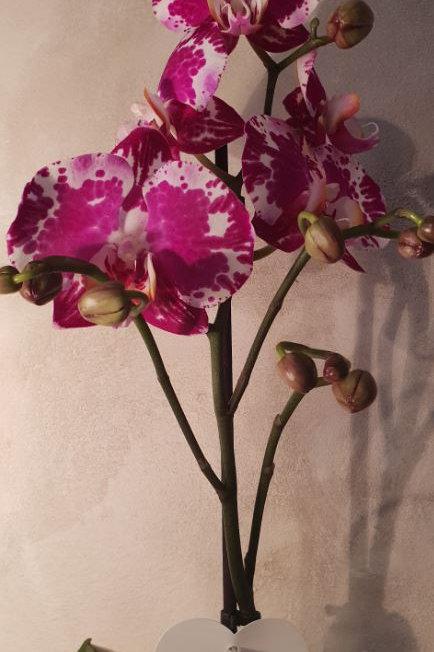 KOKEDAMA  99 Orchidée Phalaenopsis rose moucheté 1 branche