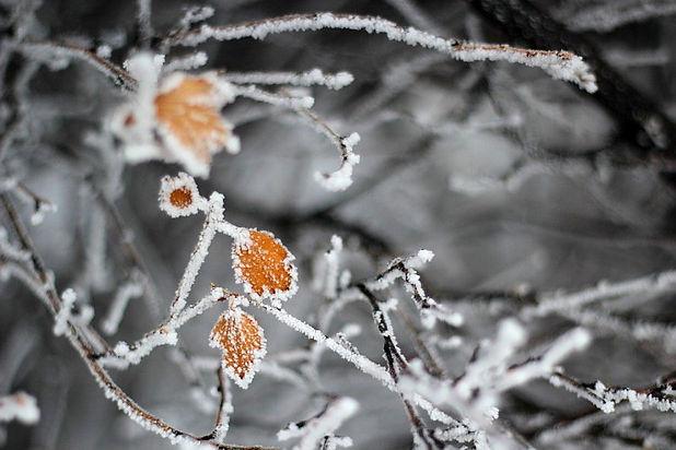 frozen tree image_Douglas Evans.jpg