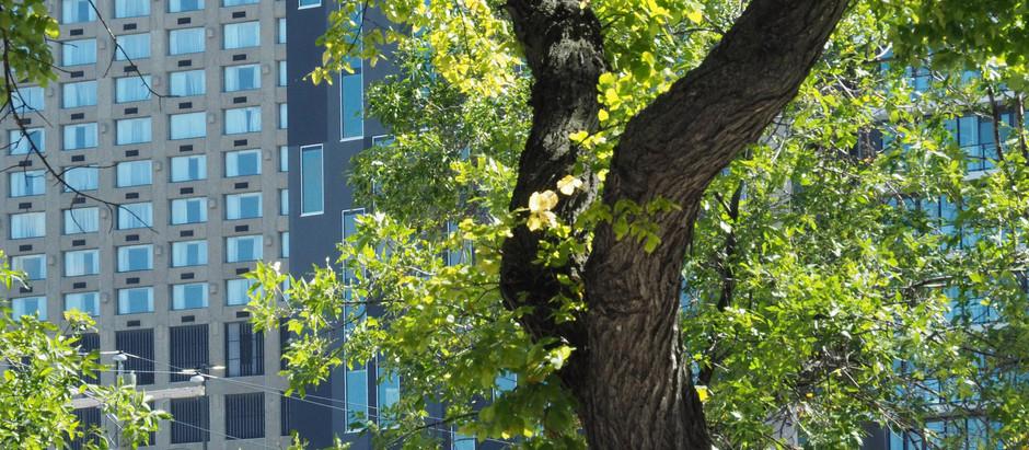 Urban Forests + Habitats