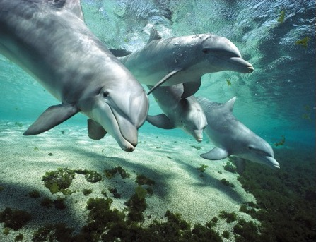 Dolphin minds