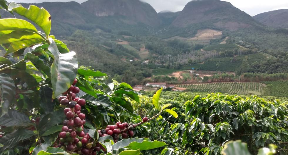 Primeiro concurso de cafés especiais de Araponga, na Serra do Brigadeiro, abre inscrições em julho