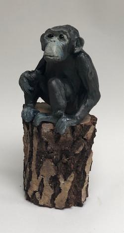 Chimp 11