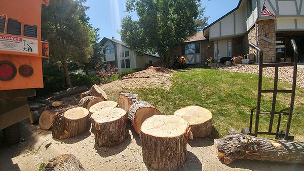 Trunk sections from removing a tree in Aurora CO