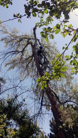 remove-a-tree