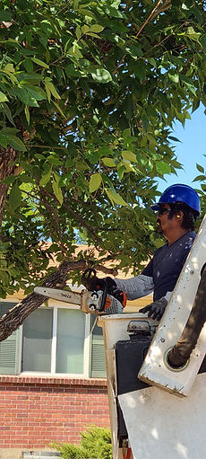 Bucket truck tree removal and tree trimming from a top 10 tree service company