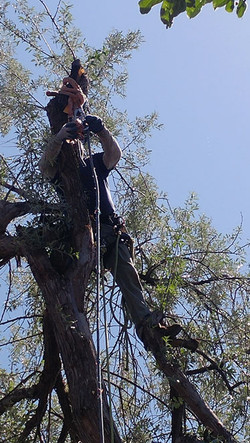 Arborist-block-and-pulley