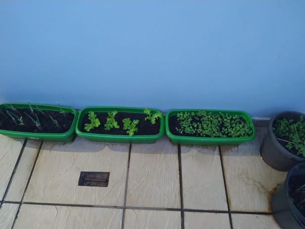 Trabalhando o cultivo do solo, 1º ano Professora Adriana - Escola Barzotto