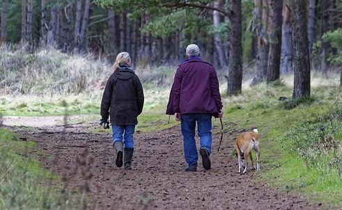 dog-walking-1070076_1280.jpg