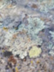 Palouse River Pic.jpg