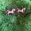 Thumbnail: Horse 🐴 love