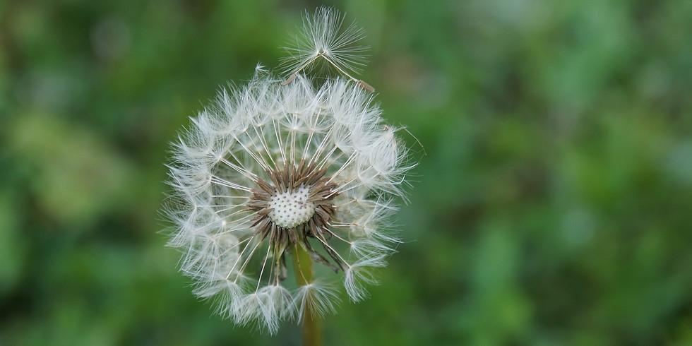 Yin Yoga - Winds Of Change