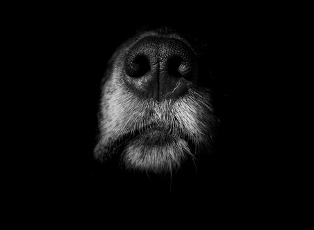 A boopable snoot!