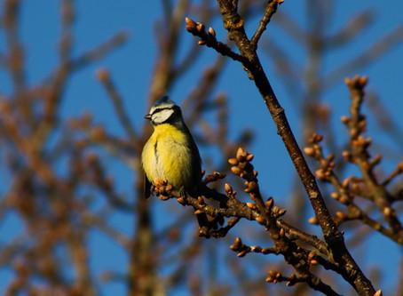 Photographing wildlife is so rewarding!