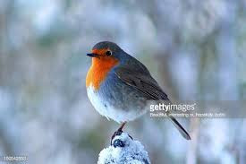 My Robin, My Mother