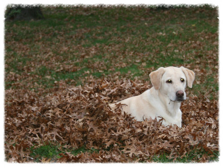 Did you play in the leaves this fall?