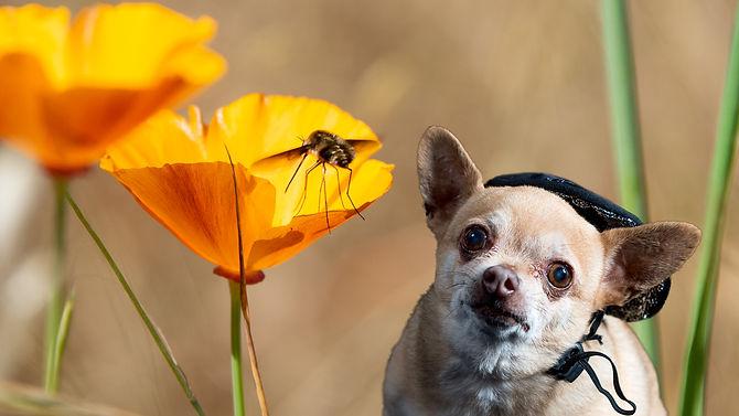 Lulu+Poppies+Pollinato 16x9 web.jpg
