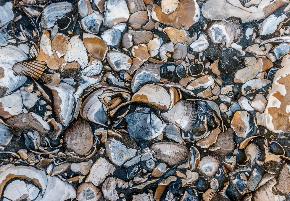 Capitola Beach 08Feb20.jpg