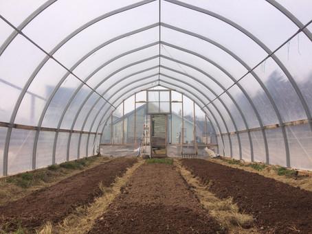 Sweet Soil Winter Share ~ 3rd Week