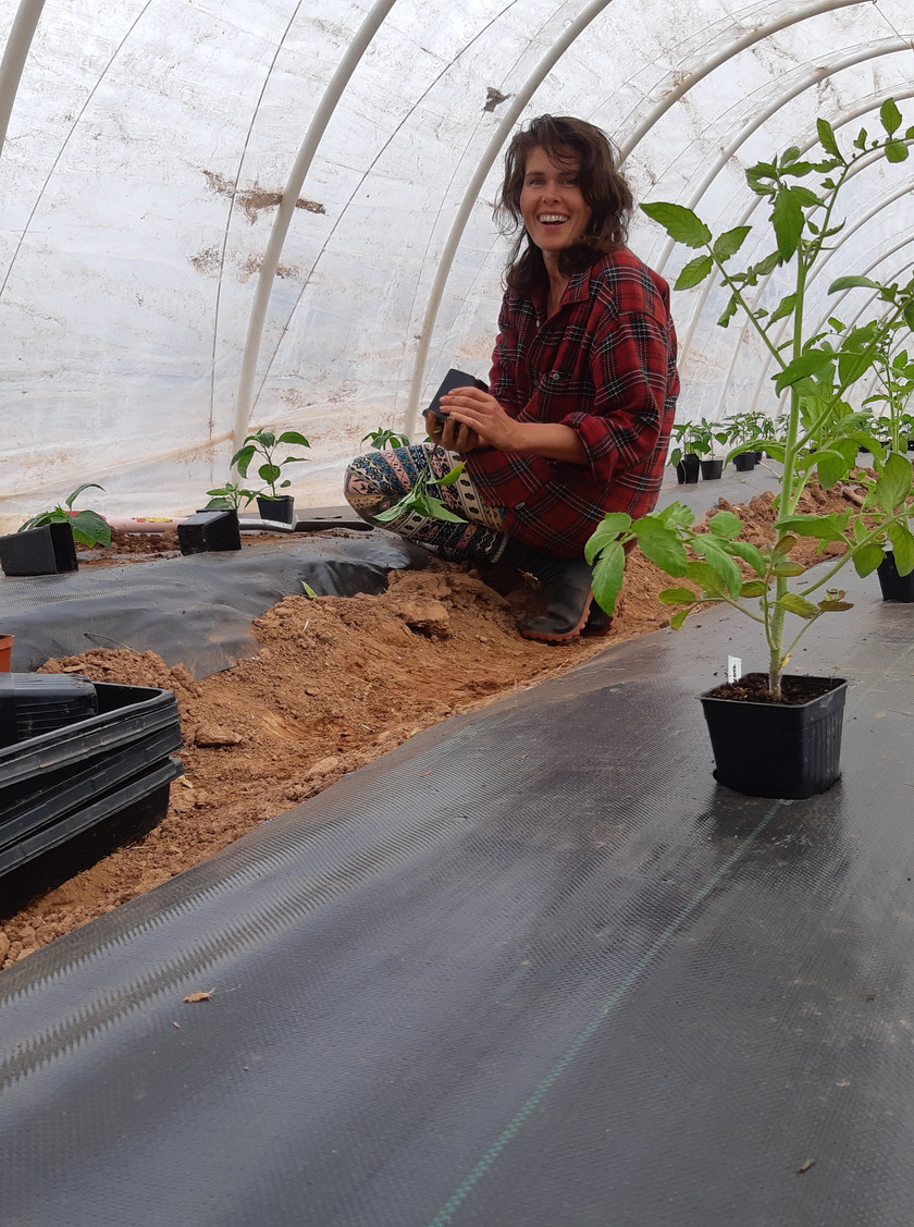Putting in the peppers, bush tomatoes and eggplants