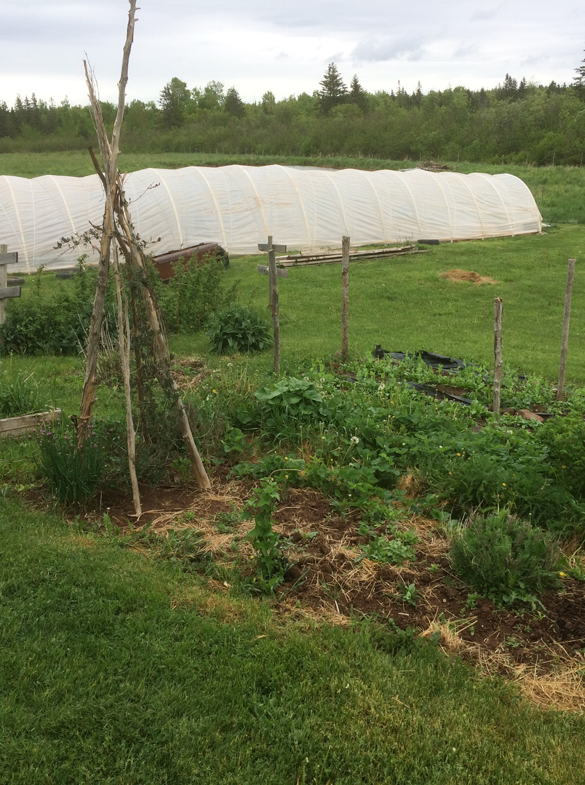 Our perennial beds just outside the farm house and a view of our caterpillar tunnel for heat loving crops.  The small beds are home to strawberries, bee balm, chives, sage, lavender, calendula, borage, milkweed, foxglove, comfrey and a raspberry patch.