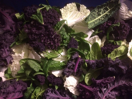 Sweet Soil Winter CSA ~ Week 7 & 8