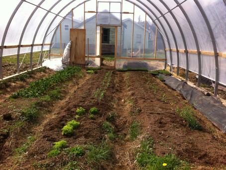 Spring Growth on the farm