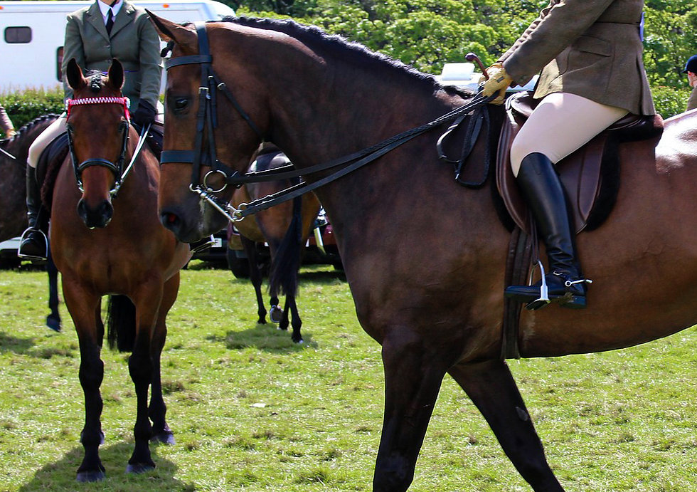 horse-2733960_1920.jpg