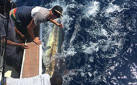 Snark Marlin.jpg