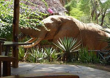 Safari Kenya | Elephant