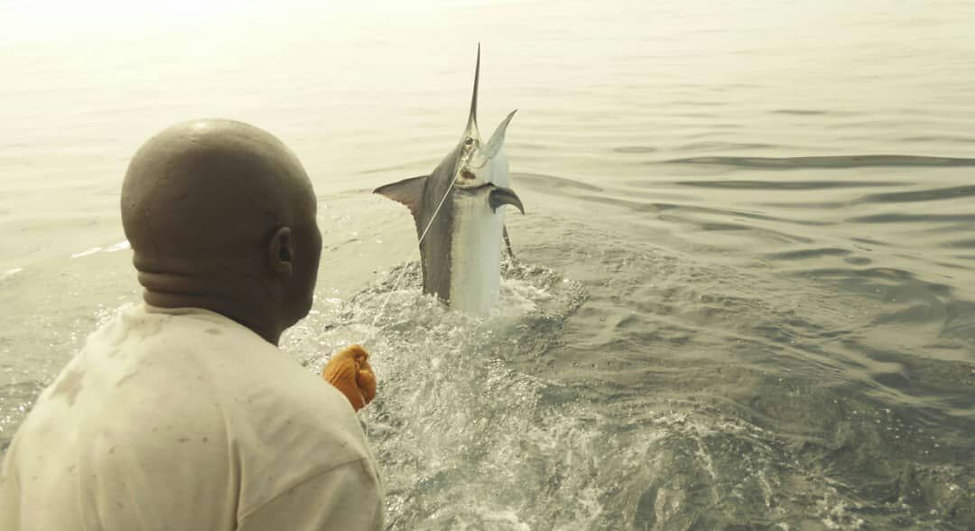 Bruce Fish.jpeg