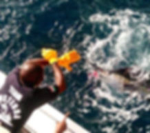 Sailfish Instedda.jpg