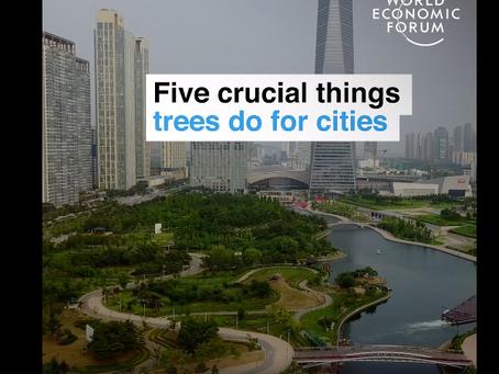 街に木を植えると良い5つの効果 WORLD ECONOMIC FORUM