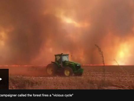 地球の肺と言われるアマゾンのジャングルが火災で失われつつある