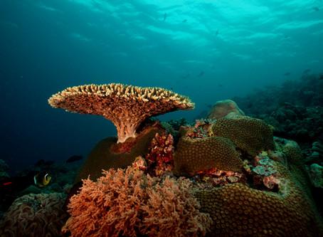 トゥバタハ岩礁海中自然公園、パラワン