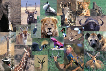 African Montage