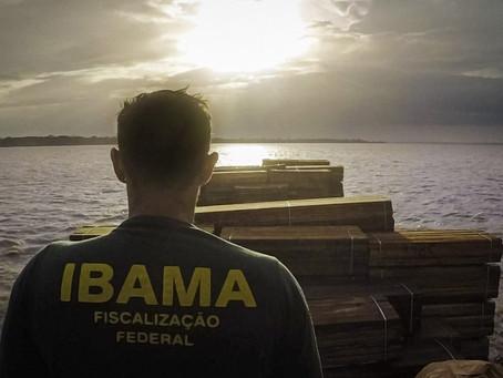 Ibama monitora 100% da exportação de madeira brasileira