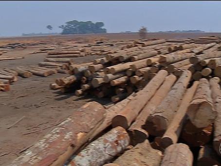 Com atuação irregular, 105 madeireiras são embargadas em MT em operações que visam zerar desmatament