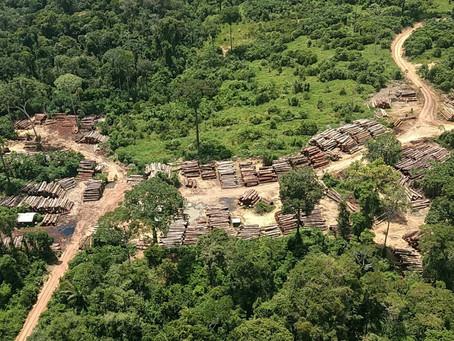 Ibama apreende madeira suficiente para carregar mil caminhões em RR