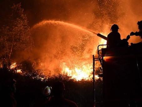 Incêndio em Portugal gera debate sobre o eucalipto, um dos motores econômicos do Brasil