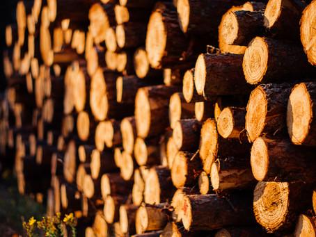 Compra e venda de madeira legal: Entenda melhor esse processo