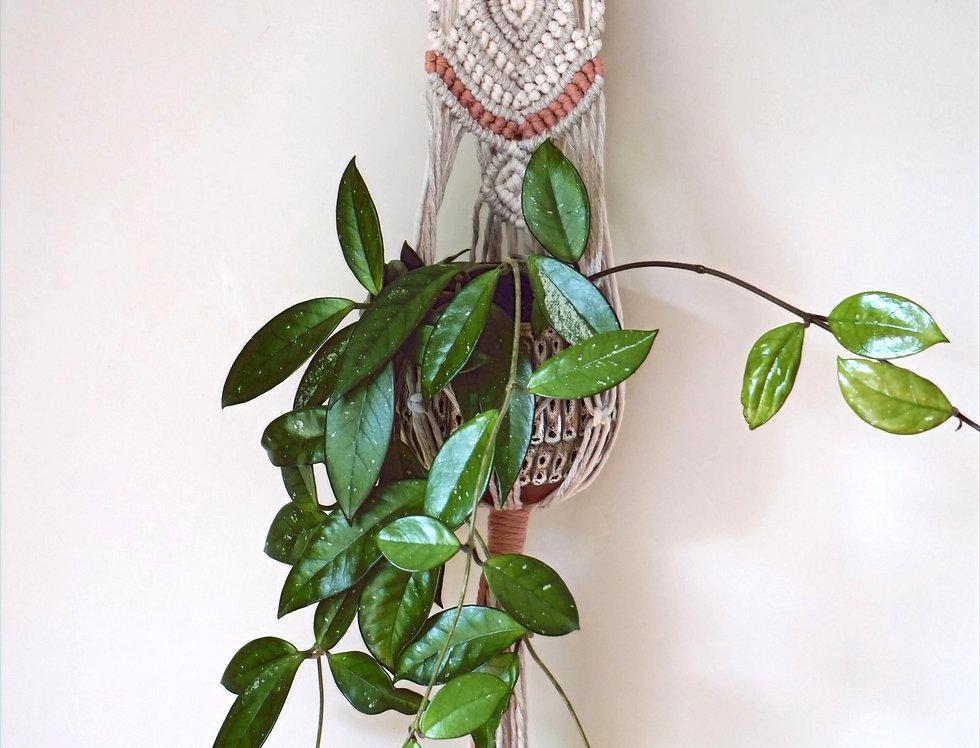 Patience Plant Hanger #1