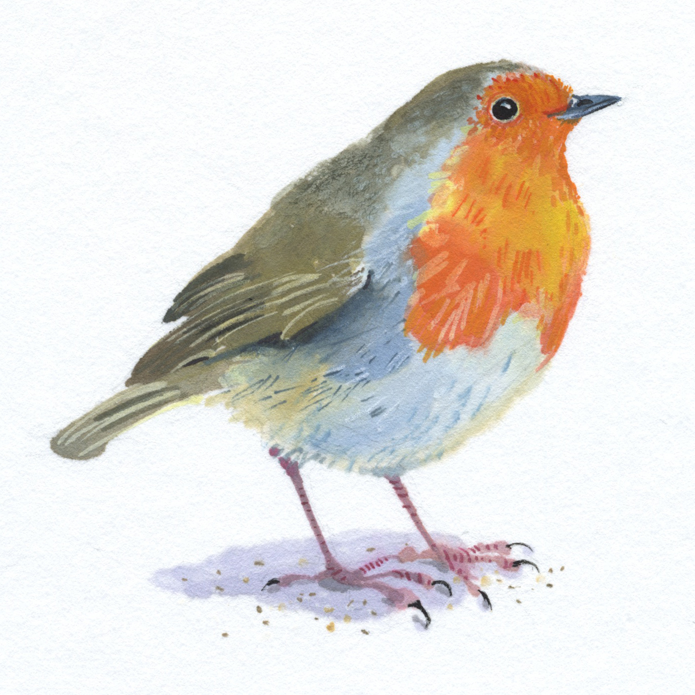 abbey hall robin