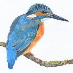 kingfisher n copy
