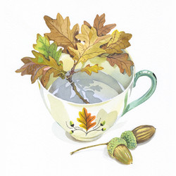 acorn cup for web