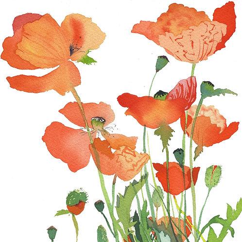 MW5 Poppies