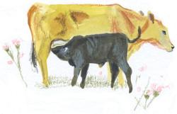 calf at foot